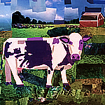 Purple Cow Graphic by Megan Coyle, mcoyle.com