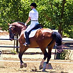 Picture of Suzanne Reed riding a brown horse